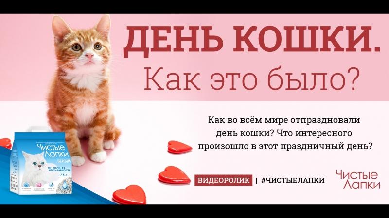 День кошки Как во всём мире отпраздновали день кошки