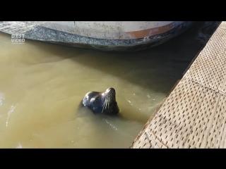 Морской лев напал на маленькую девочку