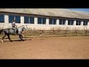 Баги: управление жеребцом на кордео