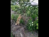 #Кот облизывает куст во дворе дома. Под кайфом? #Чапаевск