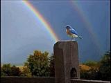 Somewhere Over the Rainbow What a Wonderful World - Israel Kamakawiwo'Ole with lyrics