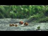 «Букашки. Приключение в Долине муравьев» (2013): Русский трейлер / http://www.kinopoisk.ru/film/708278/