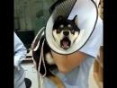 Očkování psa
