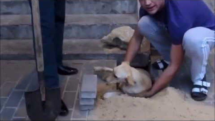 Рабочие замуровали собаку в бетон