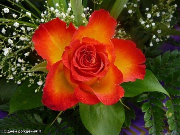 фото красивых цветов скачать бесплатно