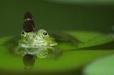 Sonic Scope - Frog Pond (Original mix)
