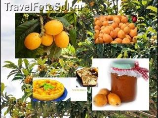 Мушмула японская или Локба - субтропический плод. Nespera.