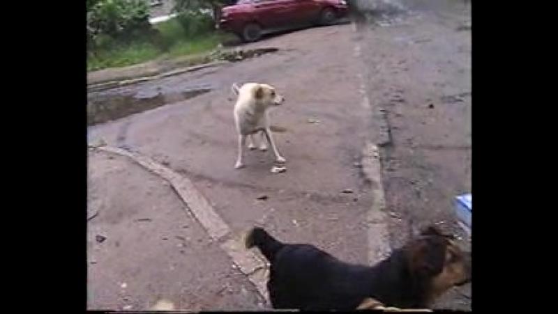 001 ГРОШ АБРАМ АРСЕН и собаки гроша и ПРОРОК САН БОЙ 2014