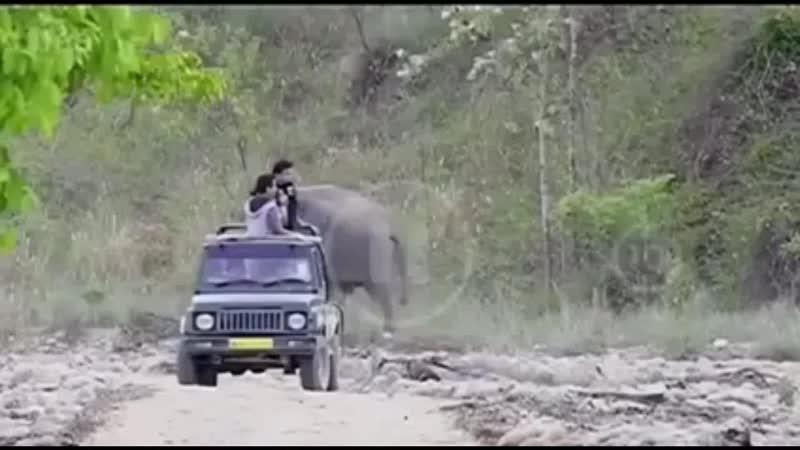 Слон-пранкер