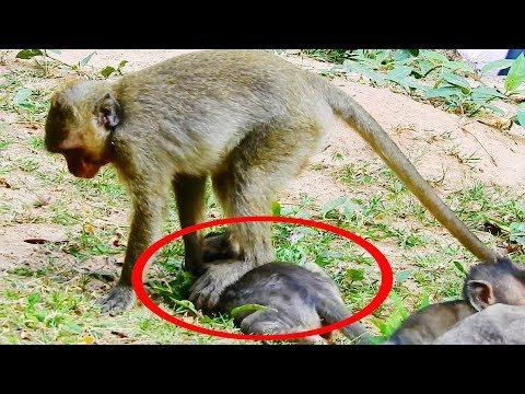 Pity Lori, Donny, Jessie, Sherri and Other Little Babies Monkeys, Baby Monkey Hungry
