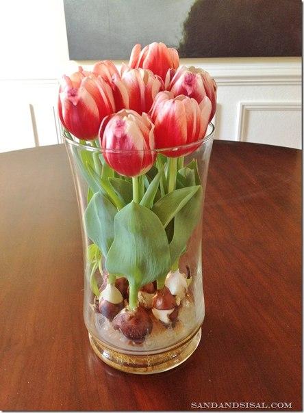 Как вырастить тюльпаны дома