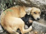 Материнская Любовь и самопоЖертвование у Животных ...