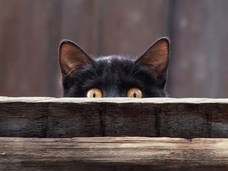 Домашняя кошка на улице