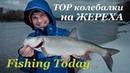 Ловля жереха на спиннинг Какие блесны работают Fishing Today