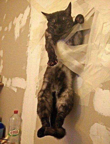 Ремонт если дома кот