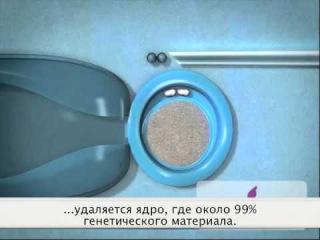 Перенос ядра и реконструкция яйцеклетки