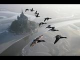 Полет Журавлей. Потрясающее Видео Как Птицы Летят на Юг