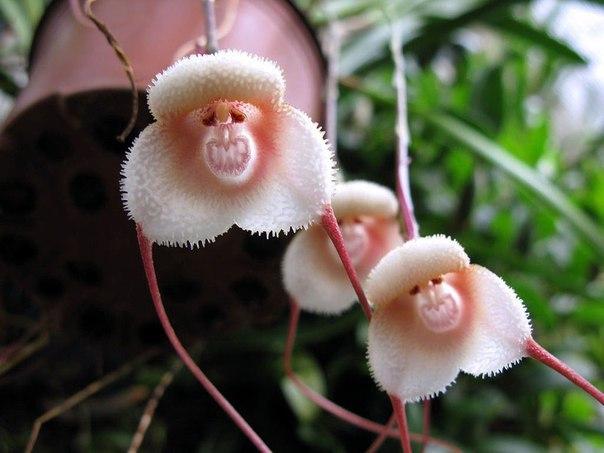 Самые удивительные орхидеи! Природа с юмором…))