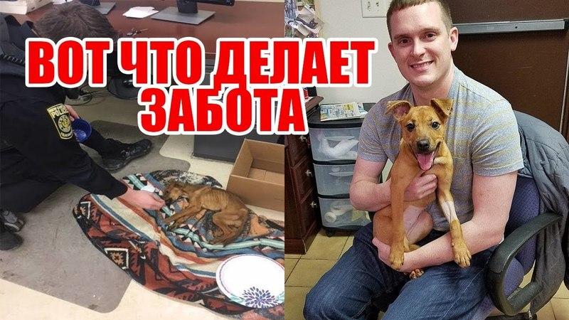 История спасения собаки Миранды| Как полицейские спасли собаку| Спасение животного от людей