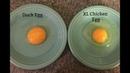 Подготовка и инкубация яиц мускусной утки Полезная информация