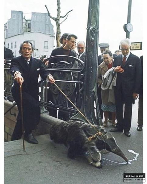 Фото Сальвадора Дали с ручным муравьедом. Нью-Йорк, 1969 г.