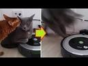 【猫ドッキリ】ルンバを踏んでたから起動スイッチ押してみた