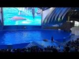 морж в дельфинарии