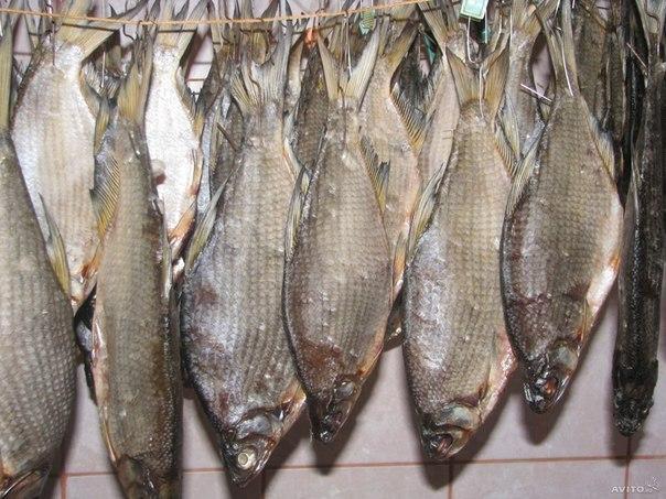 Засолка речной рыбы в домашних условиях на зиму - УО РМД