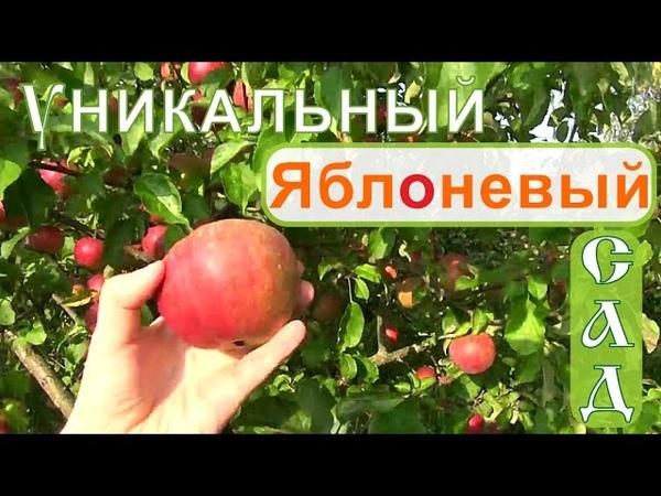 Мичурин современности! Часть 3. Яблоневый сад. Фролов в питомнике у профессора Агеева- Сентябрь.