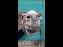 Приветливый ослик