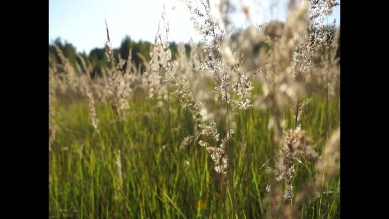 Милёнок в поле