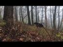 Не самая приятная встреча в лесу