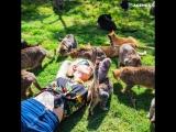 Кошачий заповедник на острове Ланаи