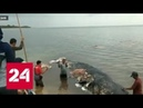 В Индонезии кита убил мусор - Россия 24