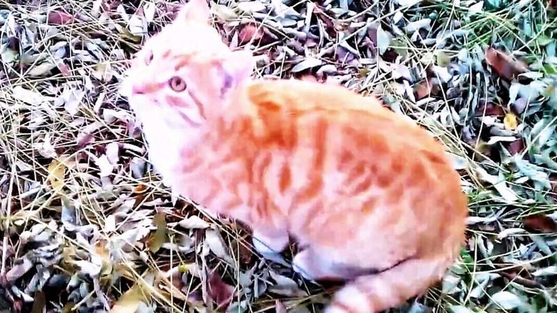 Рыжий кот по имени Котейка Хозяйка Т Конышева Архив Т Конышева Монтаж Екатерина Демидова