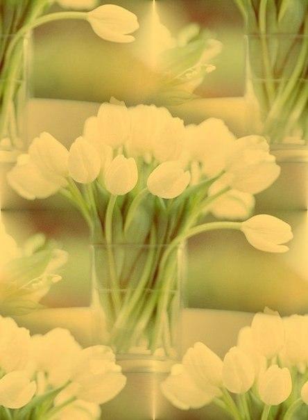 Цветочные и растительные фоны - Страница 3 KBMKct111qg