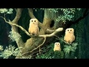 Owl Babies Picture Book Animation