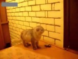 Doorbell for the cat