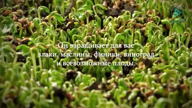 Творения Аллаха прекрасны _ Сура Пчелы аяты 3-18 [HD]