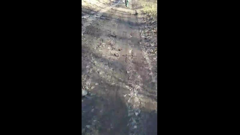 Фекалии с губернаторской дачи текут в реку Кудьма. Заповедник Зеленый город