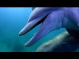 Дельфины-наркоманы упарываются иглобрюхом When dolphins boring