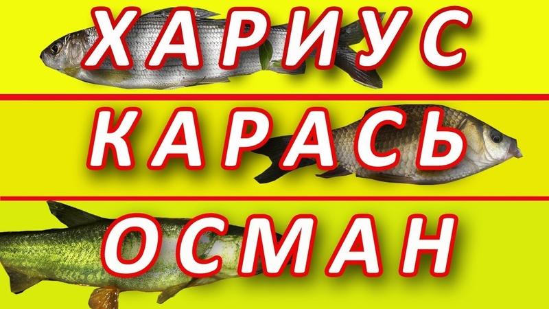Хариус, Карась, Осман. Рыбное Ассорти.