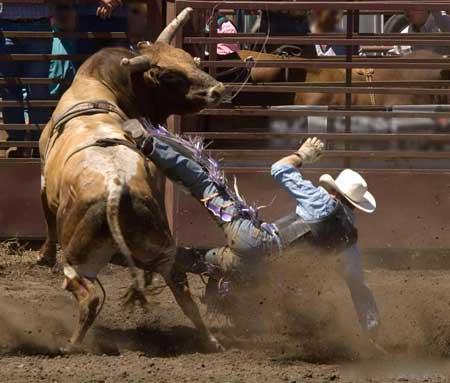 Наездники быков могут понести переломы костей, разрыв органов и даже смерть.