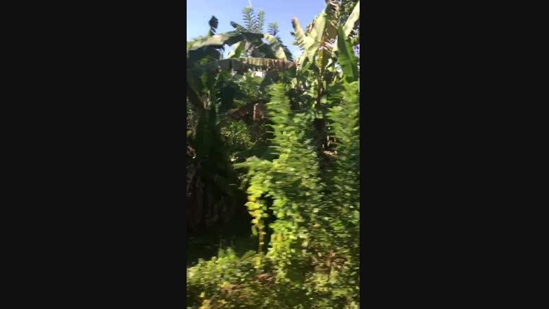 Вид из поезда Коломбо-Канди