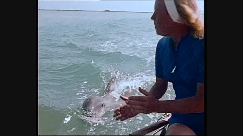 33-1 Теплокровное море (Одиссея Жака Кусто HD 1981г)