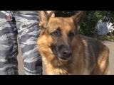 История о том, как пес Ульрих спас человека