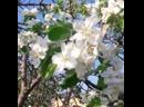 Елабуга в цвету