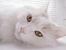 Осень всегда напоминает мне кошку, которая не спеша крадется из соседней комнаты.