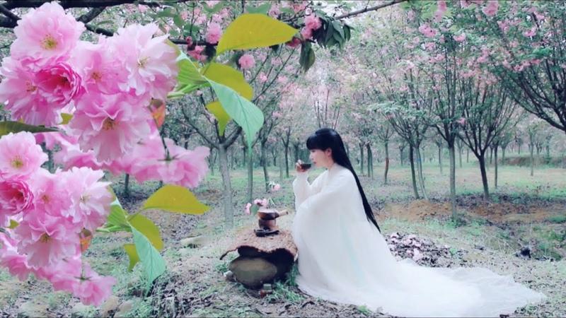 又是一年樱花季,来壶樱花茶吧(또 새로운 벚꽃 시즌에 벚꽃차를 드세요!)