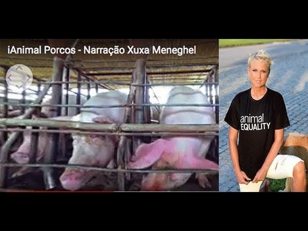 Xuxa Meneghel expõe sofrimento de porcos. AcheiC